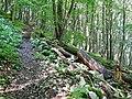 Wanderweg bei der Schwäbischen Alb - panoramio (2).jpg
