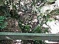 Wanderweg bei der Schwäbischen Alb - panoramio (5).jpg