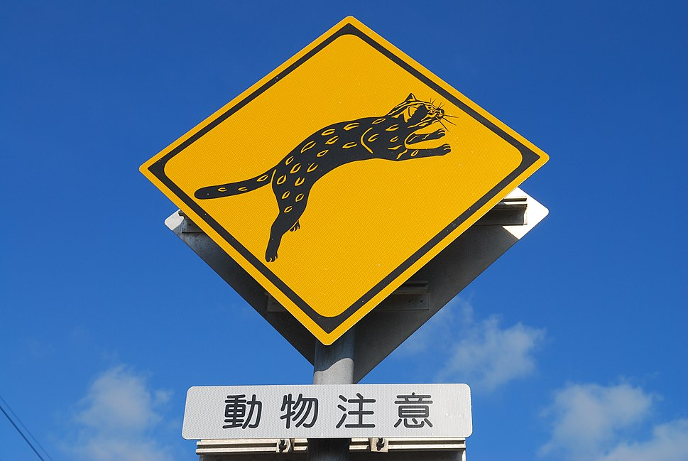 Warning signs for Iriomote cat