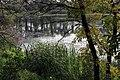 Wetland through the trees (15330864742).jpg