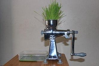 Wheatgrass - Extracting wheatgrass juice with a manual juicing machine.