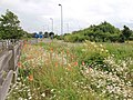 Wild flowers at the Park and Ride - geograph.org.uk - 3018343.jpg