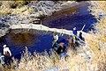 Wild trout project e walker river bridgeport0072 (25671059784).jpg
