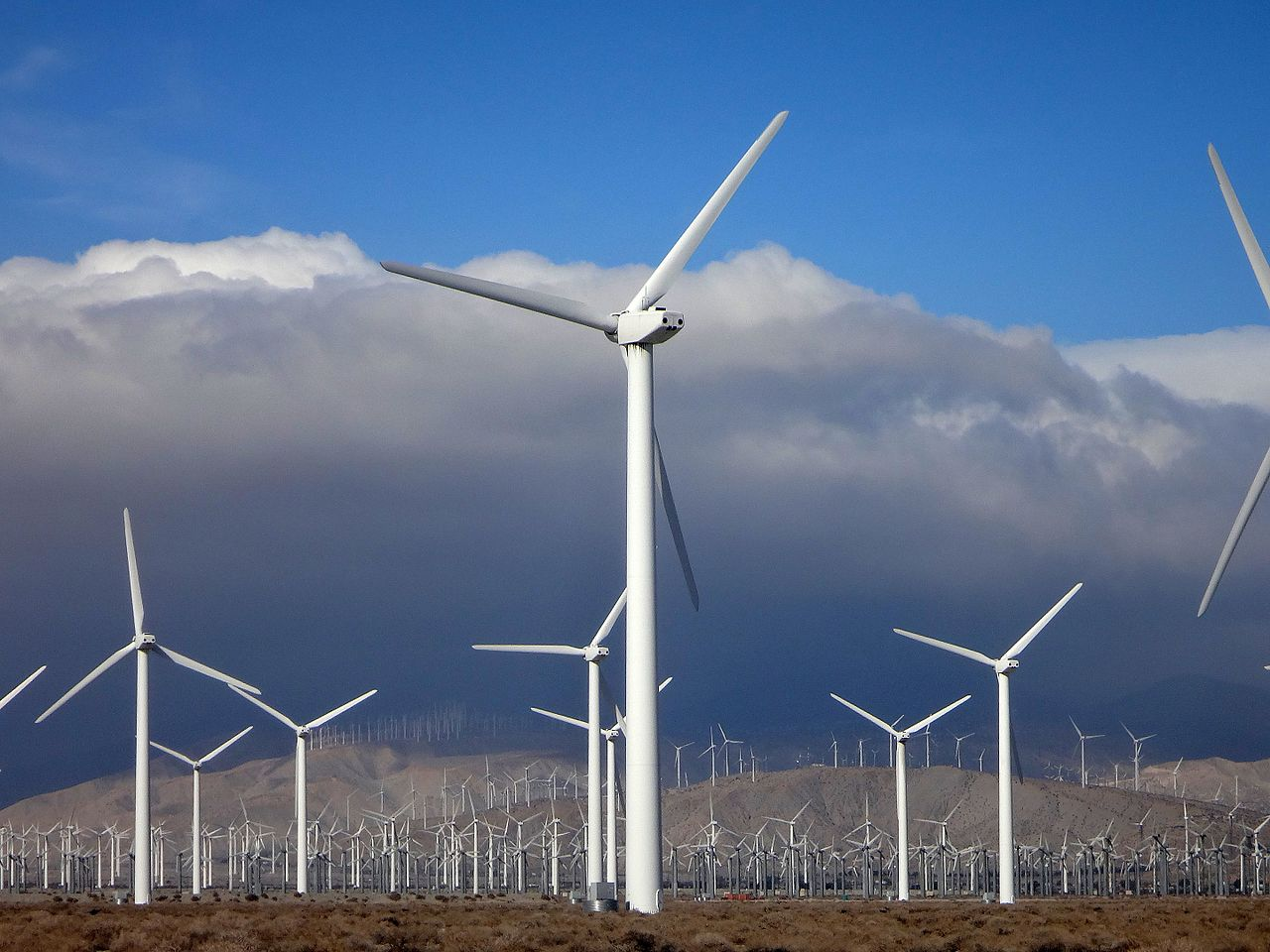 A utility-scale wind power plant in California.