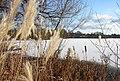 Winter am Lankower See.jpg