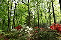 Wister Rhododendron Collection - DSC01790.JPG