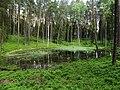 Wodne oczko koło Jeziora Dłużek w okolicy wsi Stawiguda - panoramio.jpg
