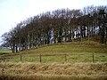 Wooded Hill Near Eaglesham - geograph.org.uk - 635408.jpg