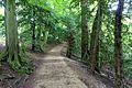 Woodland walk - Studley Royal Park - North Yorkshire, England - DSC00915.jpg