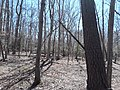 Woods on Mason Neck, early afternoon.jpg