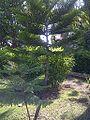 X-mastree.jpg