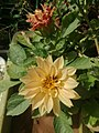 Yellow flower19.jpg