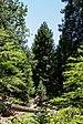 Yosemite National Park (California, USA), Yosemite Valley -- 2012 -- 4667.jpg