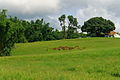 'Anaimalai' Hills Wild Life Nature Rural Western Ghats Tamil Nadu India.jpg