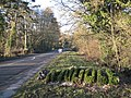'Knowle' in clipped box - geograph.org.uk - 2231031.jpg