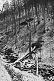 (05) Zipfelbachschlucht in Schwarzweiß.jpg