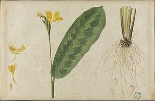 (Folhas, flores e raízes)