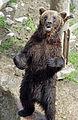 Ähtärin karhut 19.jpg