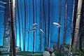 "Аквариум в павильоне ""Москвариум"", ВВЦ, Москва - panoramio (16).jpg"