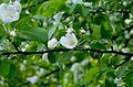 Ботанический сад, Минск - panoramio (15).jpg