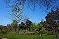 Ботанічний сад Херсонського державного університету на Миколаєвському шосе.jpg