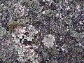 Вялікі камень. Маркаўшчына (06).jpg