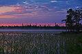 Канозеро тростник.jpg