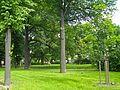 Кирочная 35, сад.jpg