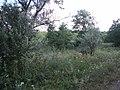 Липова балка між Сухецьким і Суворовським ставками.jpg