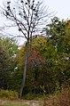 П'ятничанський парк у Вінниці. Фото 1.jpg