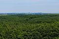 Підкамінь. Ліс 01.jpg