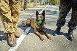 Собаки НГУ 5289 (19167063250).jpg