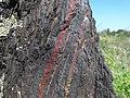 Тонкосмугасті гематит-мартитові кварцити у балці Північній Червоній.jpg