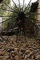 מוזיאון לתולדות גדרה והבילויים - אתרי מורשת במרכז הארץ 2015 - גדרה (218).JPG