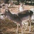 المحمية الطبيعية - الوادي الأسيوطي - أسيوط - مصر - The Natural Reserve - Al-Wady El-Assiuty - Assiut - Egypt.jpg