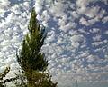 سپیدار و ابر.jpg