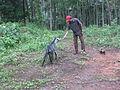കോലാട് goat.JPG