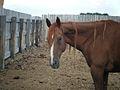 ม้า - panoramio.jpg