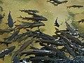 อุทยานแห่งชาติน้ำตกพลิ้ว จ.จันทบุรี (26).jpg