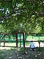やぎ (愛知県西尾市 佐久島) - panoramio.jpg