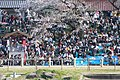 岡崎公園 - panoramio.jpg