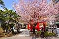 弥彦(伊夜日子)神社(Yahiko Shrine) - panoramio.jpg