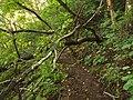 挡路树 - Fallen Tree - 2012.08 - panoramio.jpg