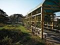 月季园 - Rose Garden - 2011.11 - panoramio.jpg