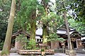高千穂神社の夫婦杉 - panoramio.jpg
