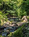 -29 Naturschutzgebiete in Thüringen Schwarzatal 159.jpg