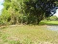 09194jfLandscapes Pasong Callos Fields San Rafael Bulacan Roadsfvf 23.JPG