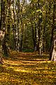 15-11-01-Kaninchenwerder-RalfR-WMA 3292.jpg