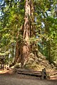 16 21 0093 redwood.jpg