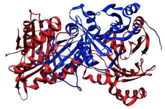 4-Hydroxyphenylpyruvate dioxygenase - Image: 1SP9 Ribbon